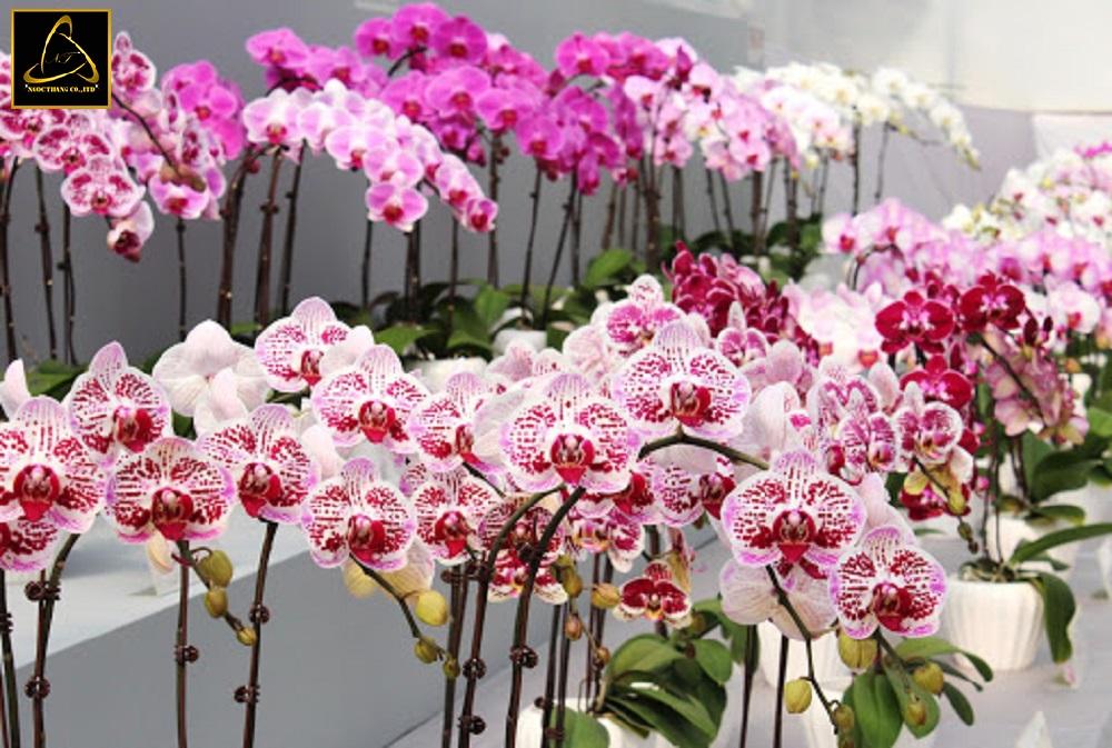 Lợi ích Thiết kế website bán hoa phong lan