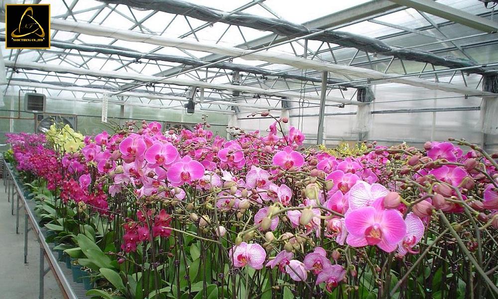 Lưu ý khi thiết kế website bán hoa phong lan