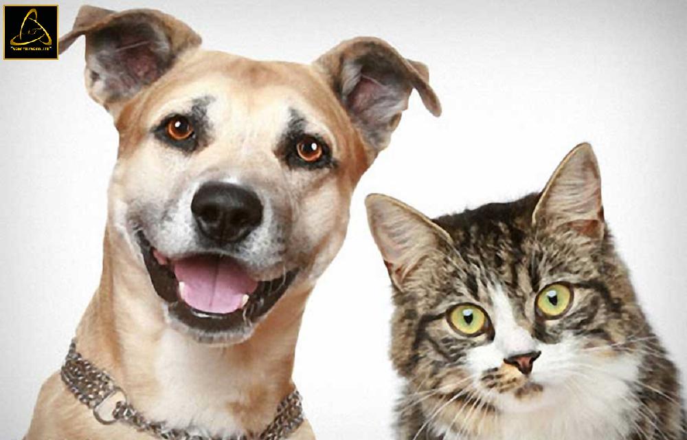 Lưu ý khi thiết kế website chăm sóc thú cưng